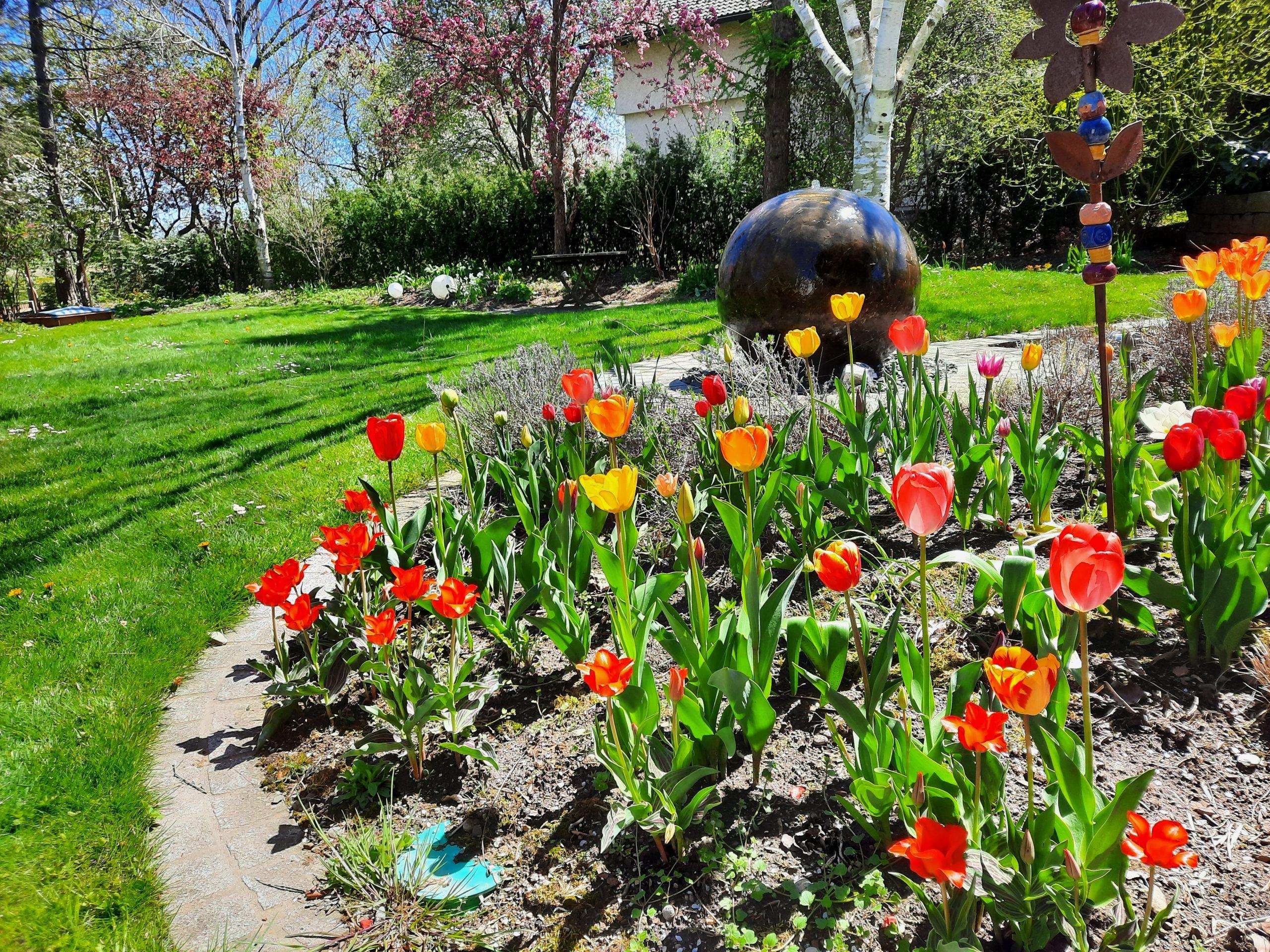 Tulpen u. Wasserspiel